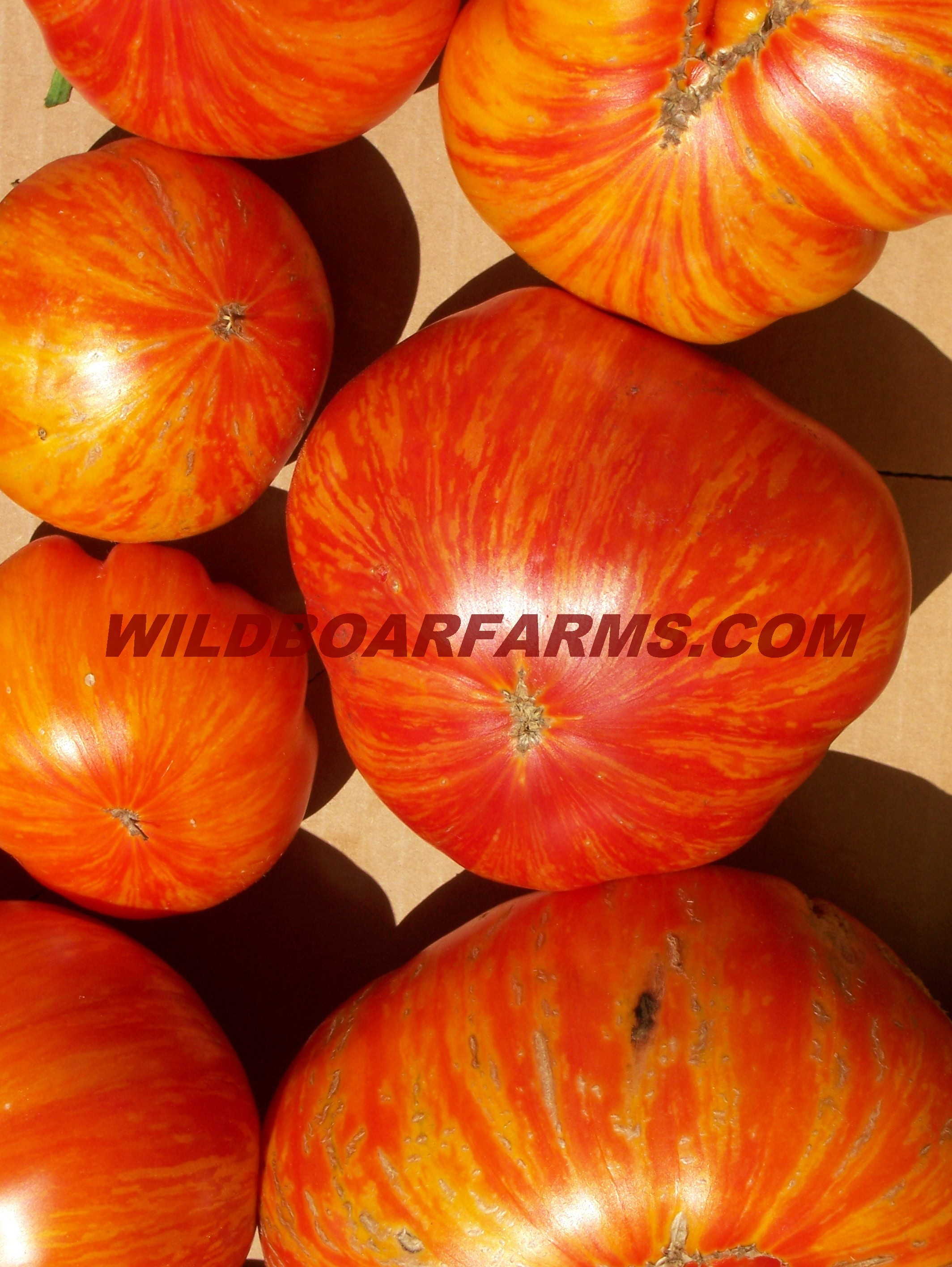 Wild Boar Farms Tomatoes 06