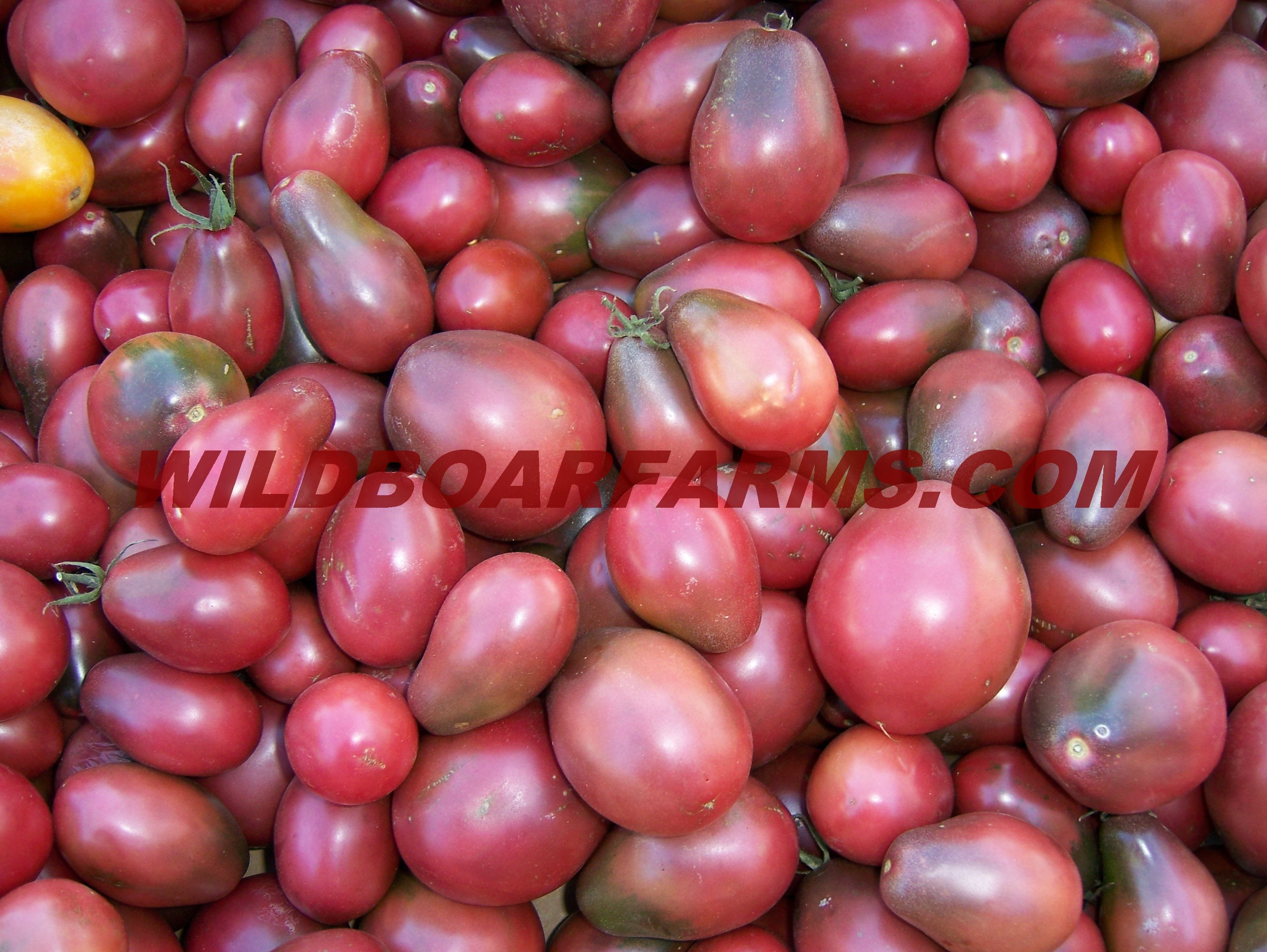 Wild Boar Farms Tomatoes 09