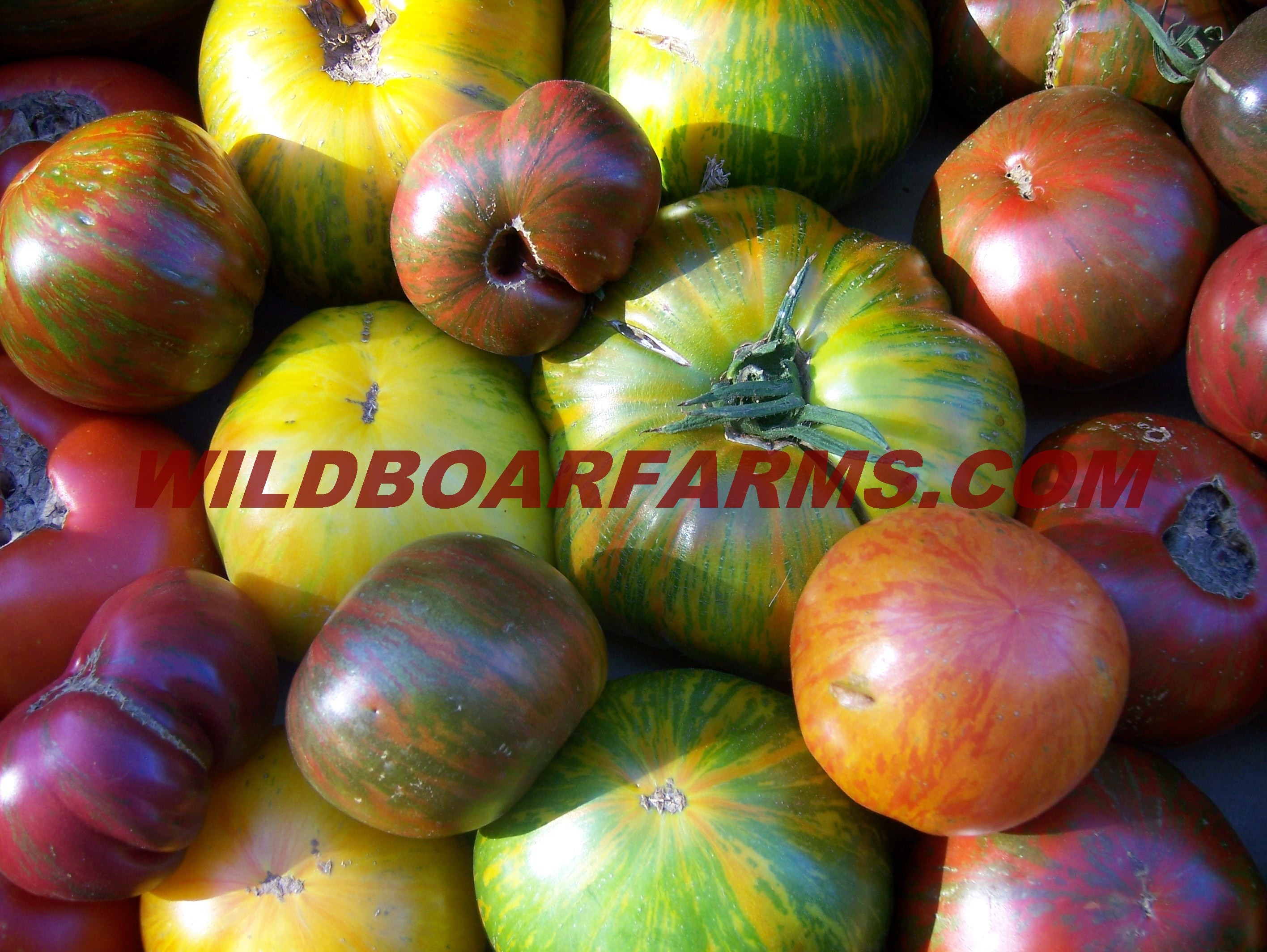 Wild Boar Farms Tomatoes 30