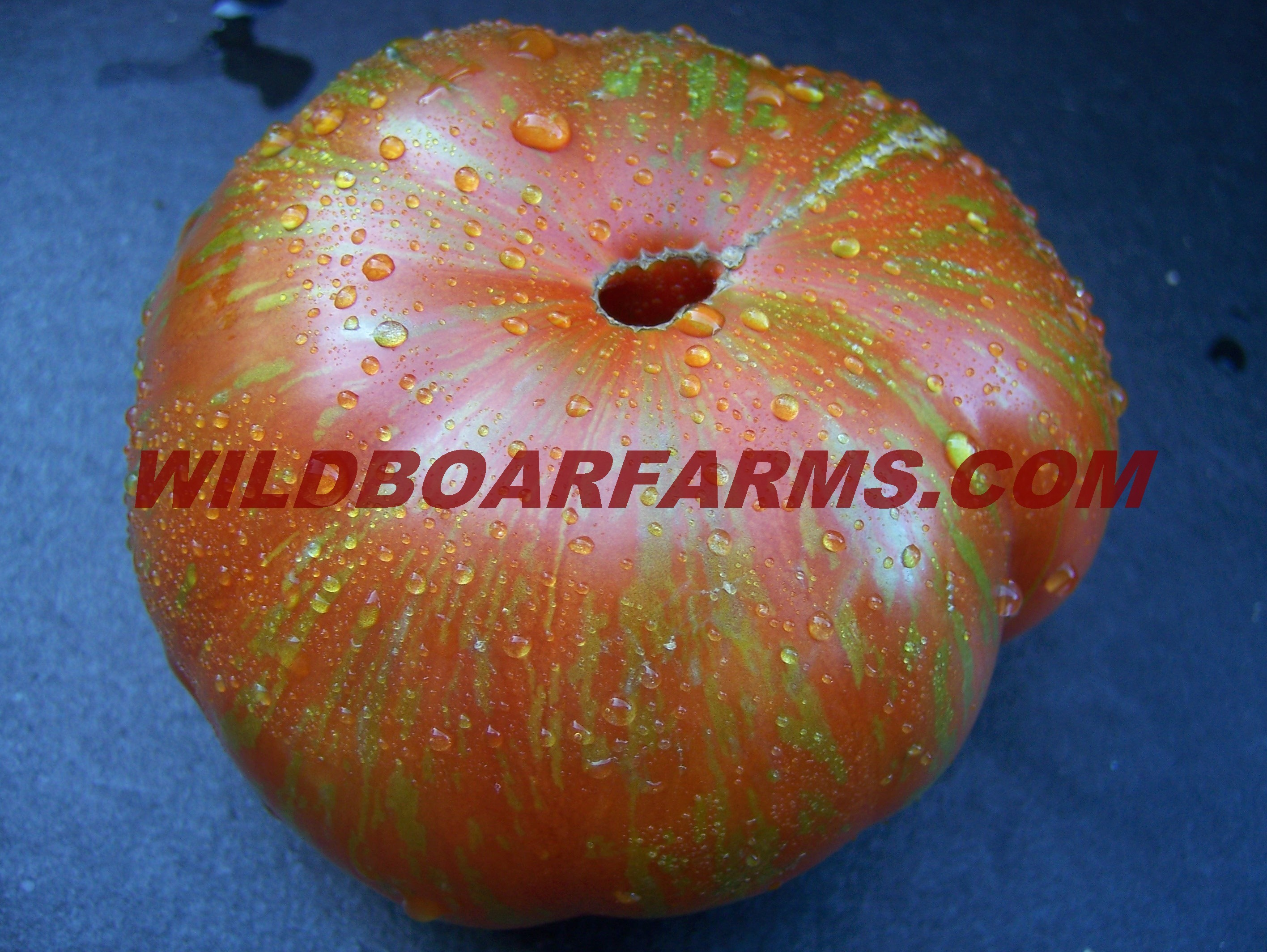 Wild Boar Farms Tomatoes 34