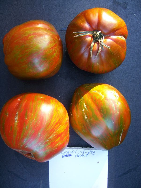 Wild Boar Farms Tomatoes 38