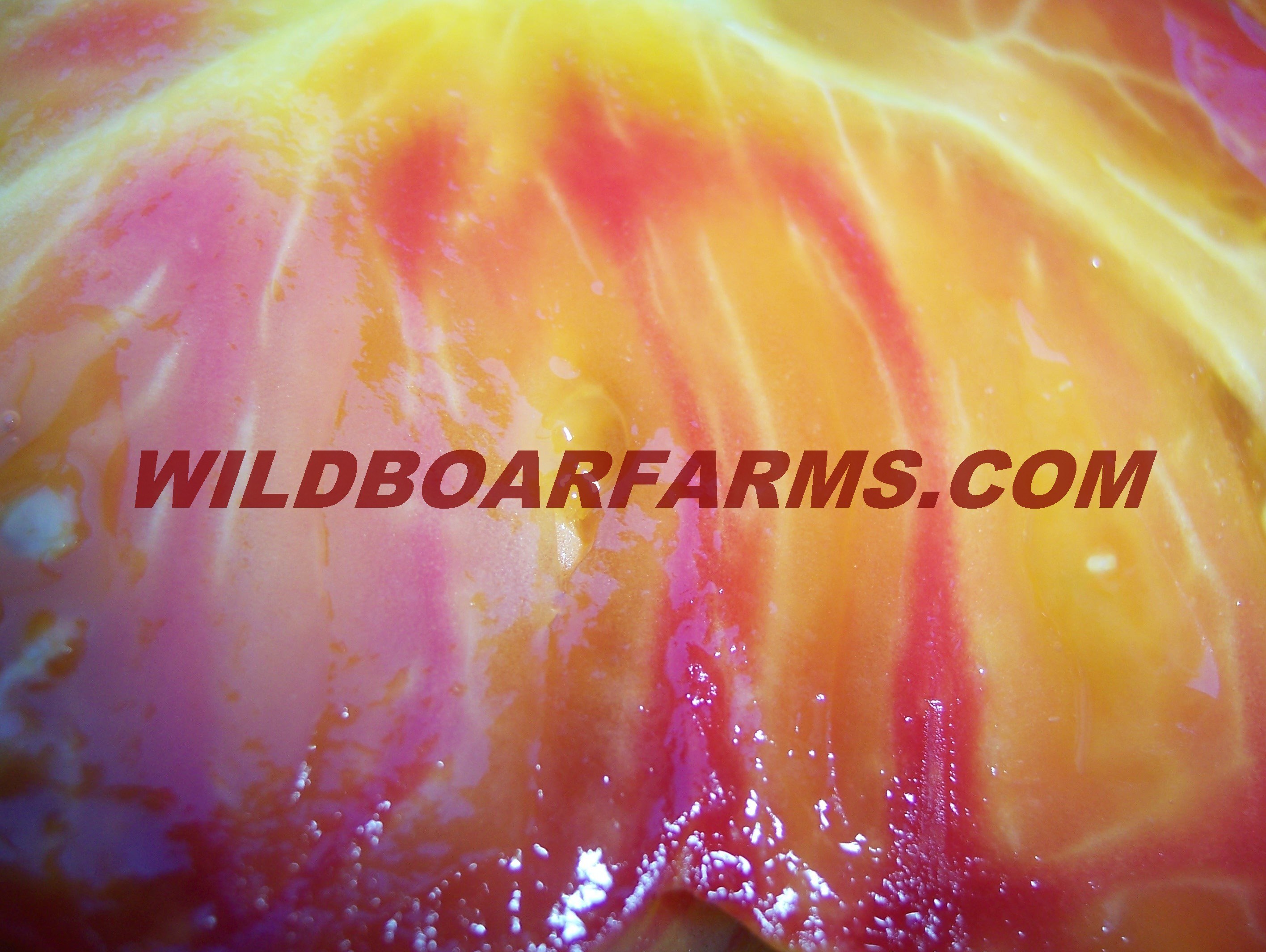 Wild Boar Farms Tomatoes 41