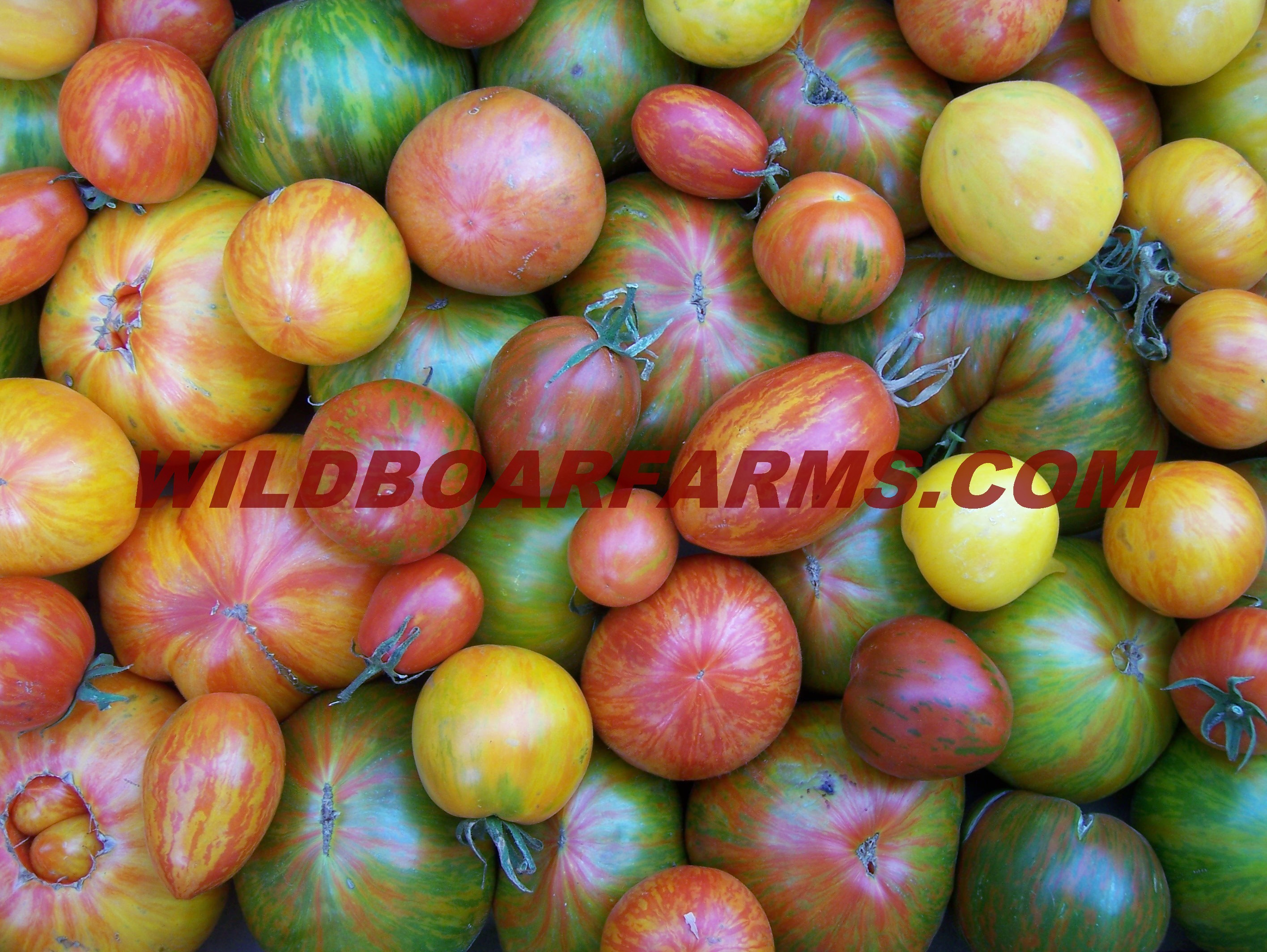 Wild Boar Farms Tomatoes 50