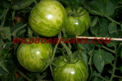 Wild Boar Farms Tomatoes 02
