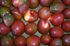 Wild Boar Farms Tomatoes 03