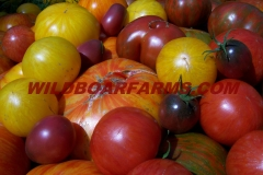 Wild Boar Farms Tomatoes 07