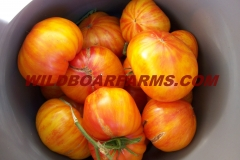 Wild Boar Farms Tomatoes 19