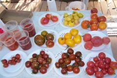 Wild Boar Farms Tomatoes 25