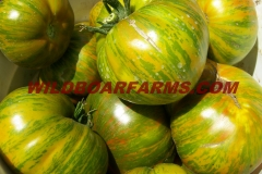 Wild Boar Farms Tomatoes 31