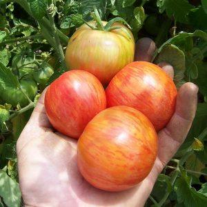 WILD-BOAR-FARMS-RED-BOAR.jpg