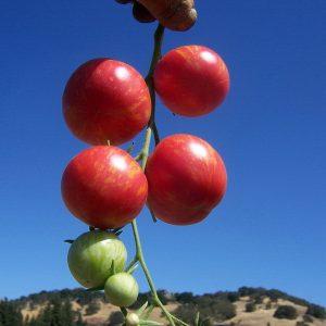 WILD-BOAR-FARMS-SWEET-CARNEROS-PINK.jpg
