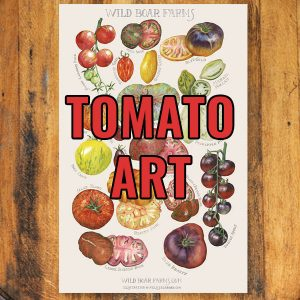 Tomato Art/Illustrations