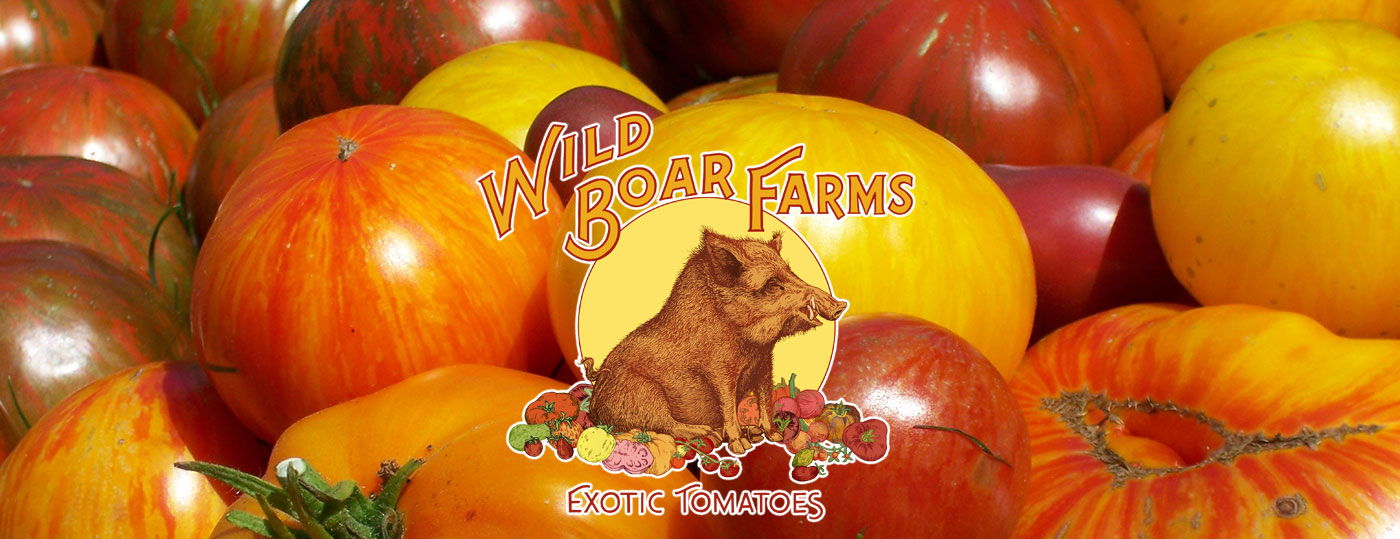 wel e to wild boar farms   wild boar farms