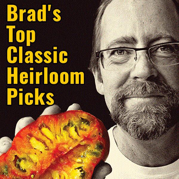 Brad's Top Picks